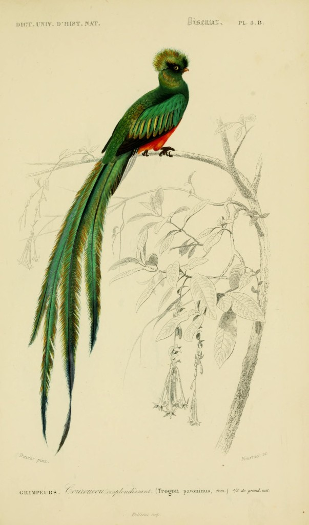 This image has an empty alt attribute; its file name is dorbigny-exotic-green-bird.jpg